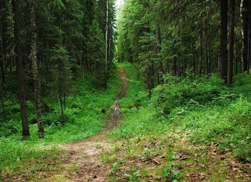 В Ярославской области спасли женщину, которая провела ночь в лесу «с большим количеством медведей»
