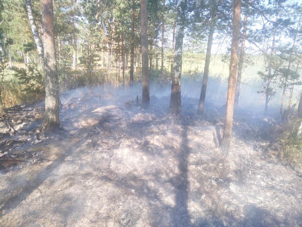 Все возгорания на территории лесного фонда Ярославской области оперативно ликвидированы