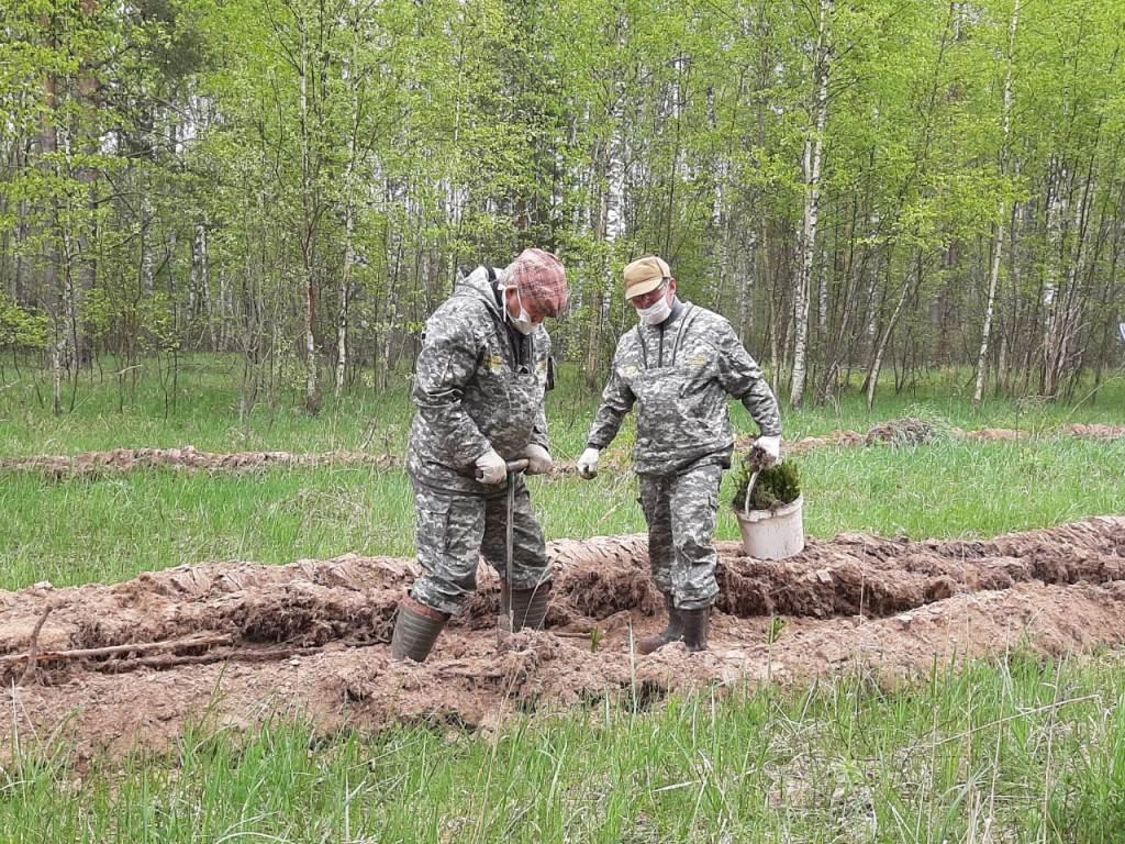 Осенью работы по лесовосстановлению в Ярославской области проведут на площади около 80 гектаров