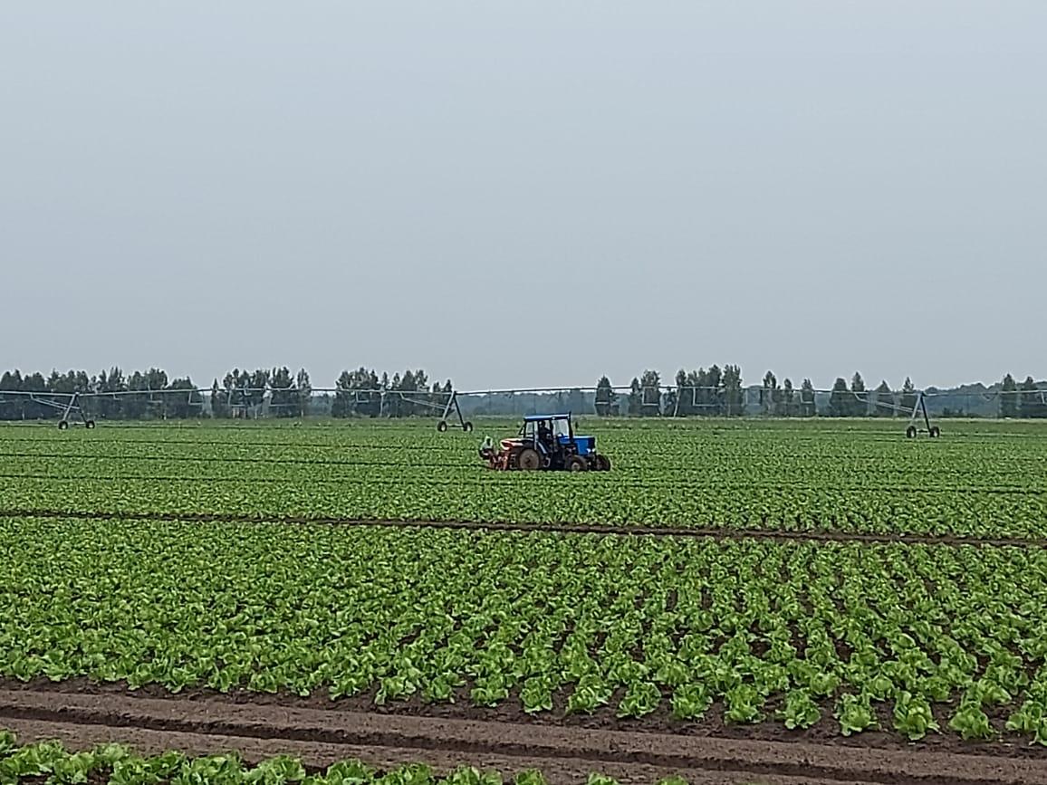 Ярославские сельхозпроизводители начали уборку урожая