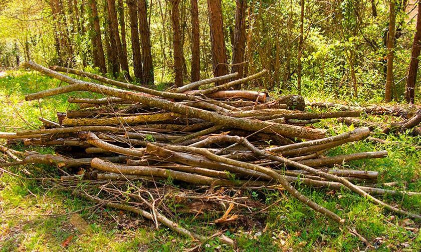 В Ярославской области усилен контроль за разработкой лесосек