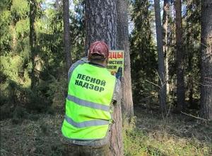 В Ярославской области продолжается работа по демонтажу с деревьев незаконно размещенных рекламных конструкций