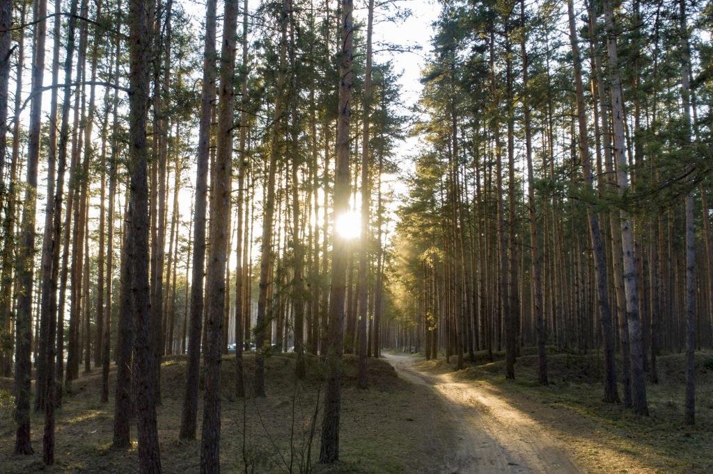 В департаменте лесного хозяйства рассказали, как ухаживают за молодыми деревьями