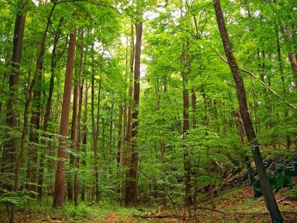 Провел ночь в лесу: в Ярославской области нашли пропавшего пенсионера