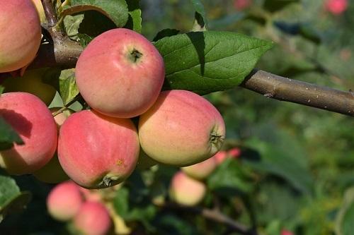 «Индекс шарлотки» в Ярославской области: как изменились цены на десерты в яблочный сезон