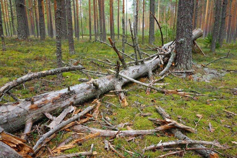 Лесопатологические обследования в Ярославской области проведены на площади порядка 3400 гектаров