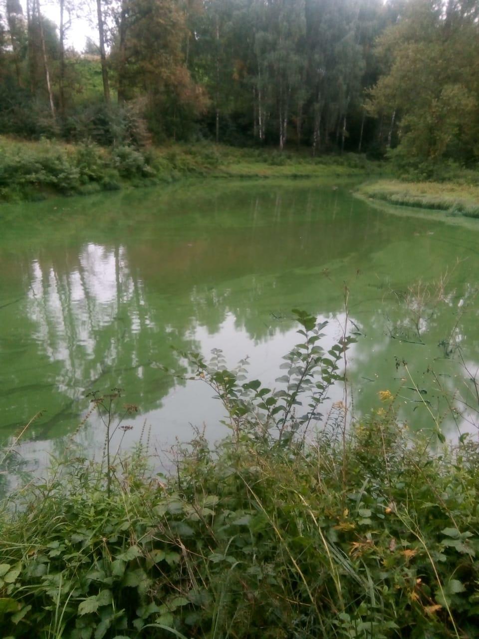 В Ярославле провели проверку по факту загрязнения реки Норы
