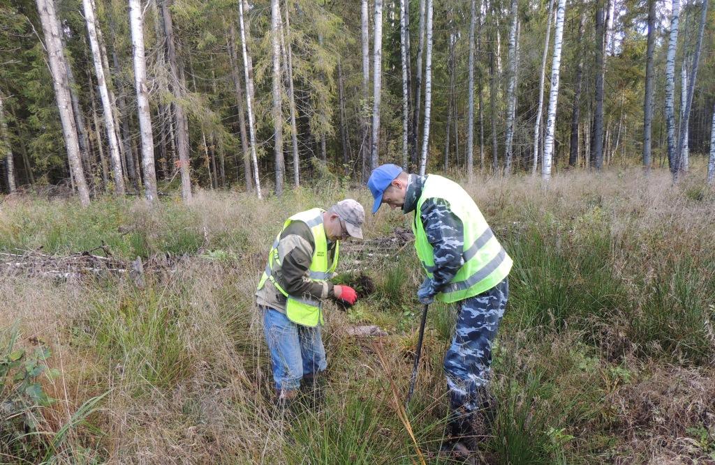 В Ярославской области стартовала акция «Сохраним лес»