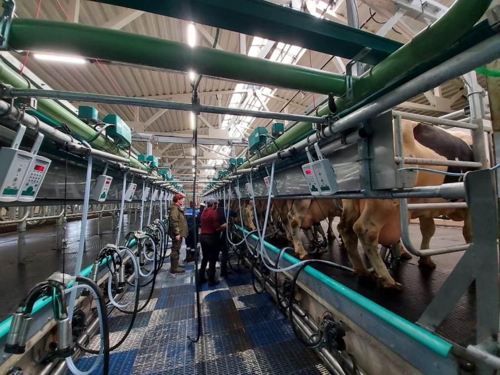 Под Ярославлем открыли молочно-товарный комплекс на 1400 голов крупного рогатого скота
