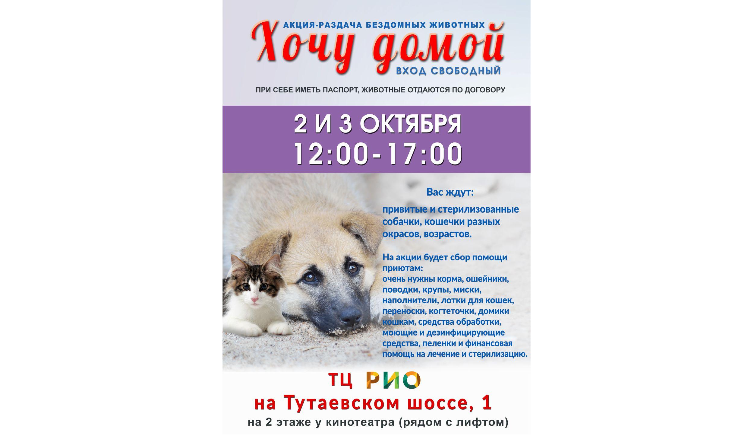 В торговом центре Ярославля бездомных животных отдадут в добрые руки