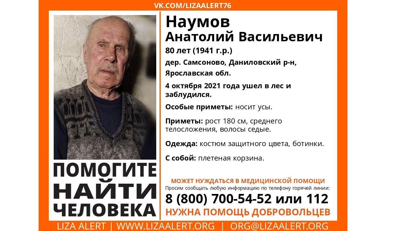 Ушел в лес и заблудился: в Ярославской области ищут пропавшего пенсионера