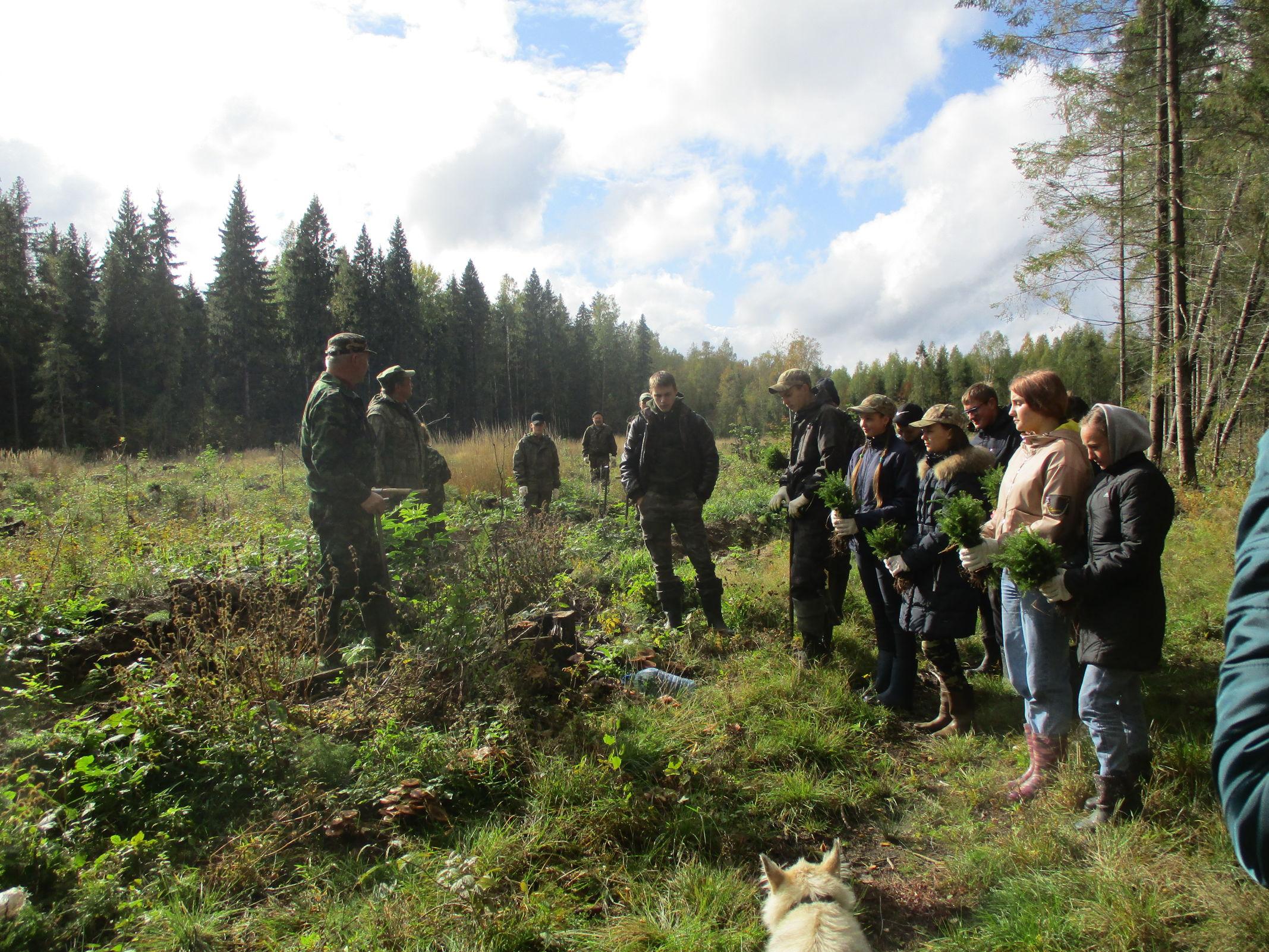 В лесу в Брейтовском районе Ярославской области посадили 7 тысяч елей в рамках природоохранной акции