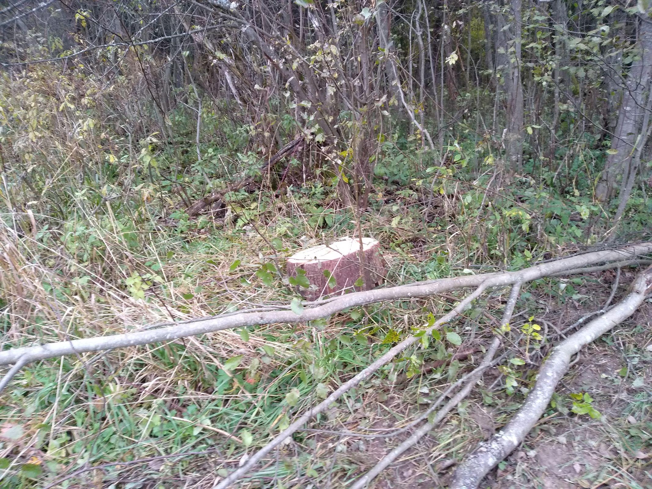 В Ярославской области незаконно вырубили деревьев на 678 тысяч рублей: возбуждено уголовное дело