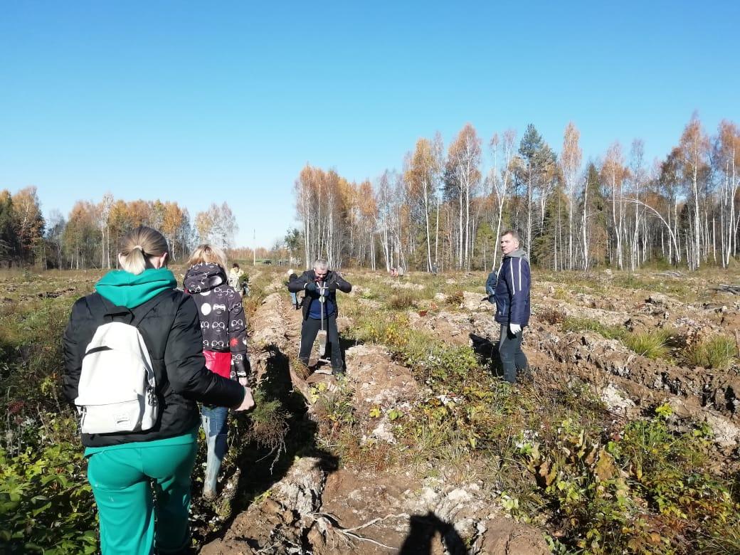 В Ростовском районе в рамках экоакции посадили почти 14 тысяч елей
