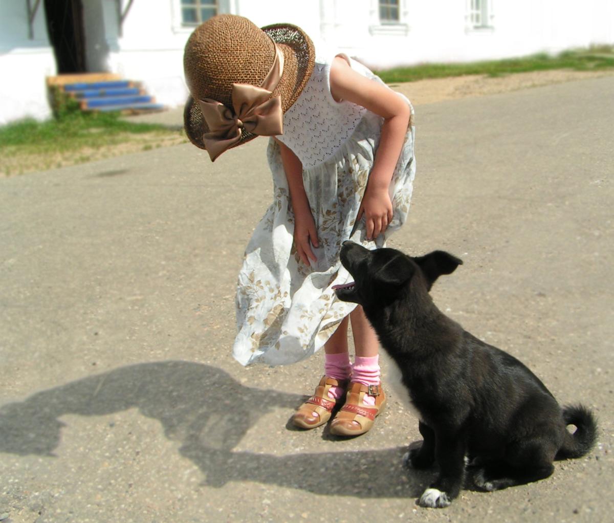 В Рыбинске бесплатно животных привьют от бешенства