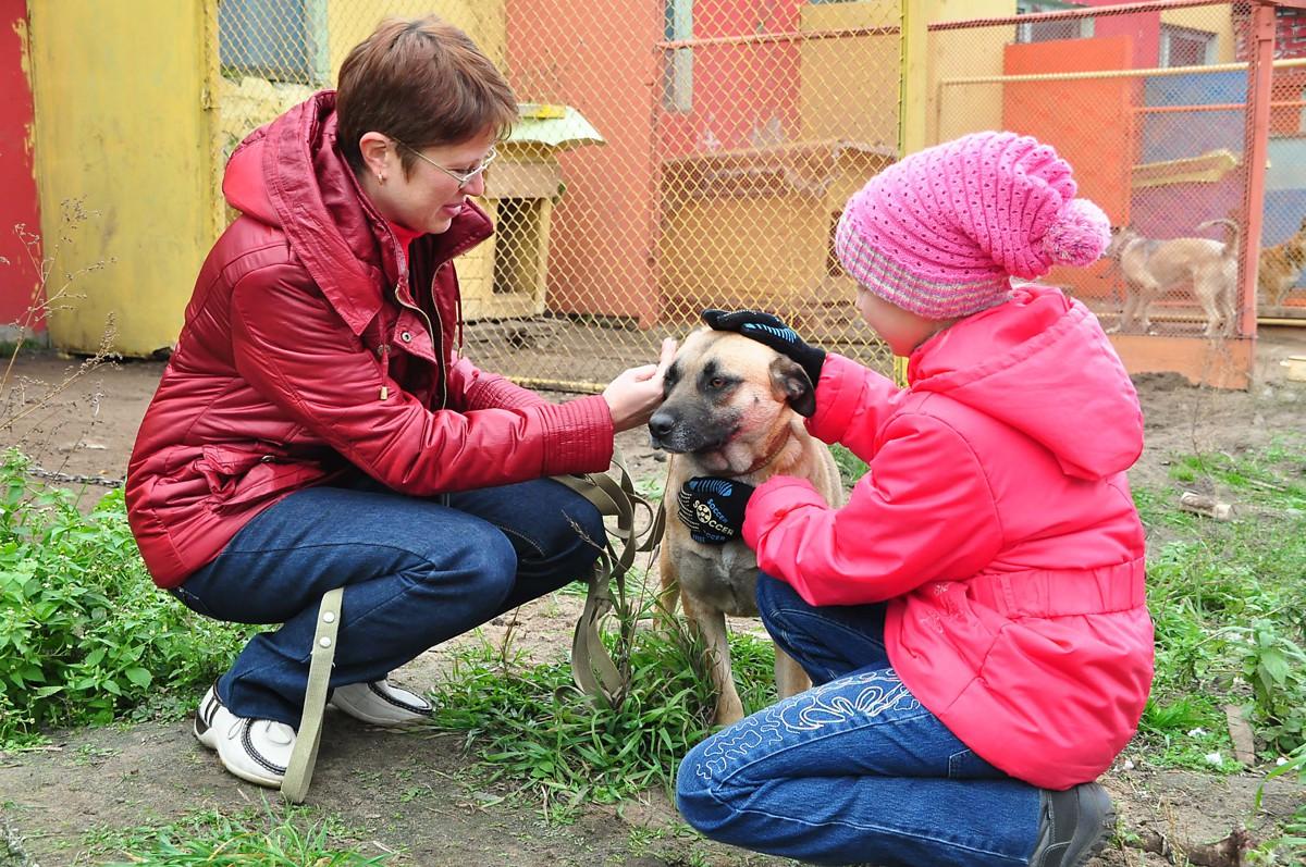Ваша собака напала на моего ребенка: в Ярославской области новый вид мошенничества