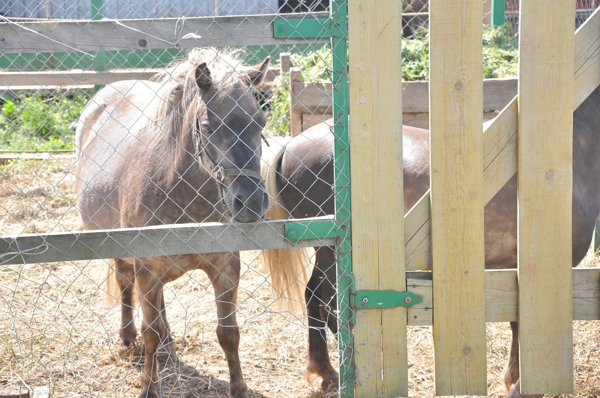 В Крыму лошадь лягнула в лицо девочку из Ярославля: ребенок получил серьезные травмы