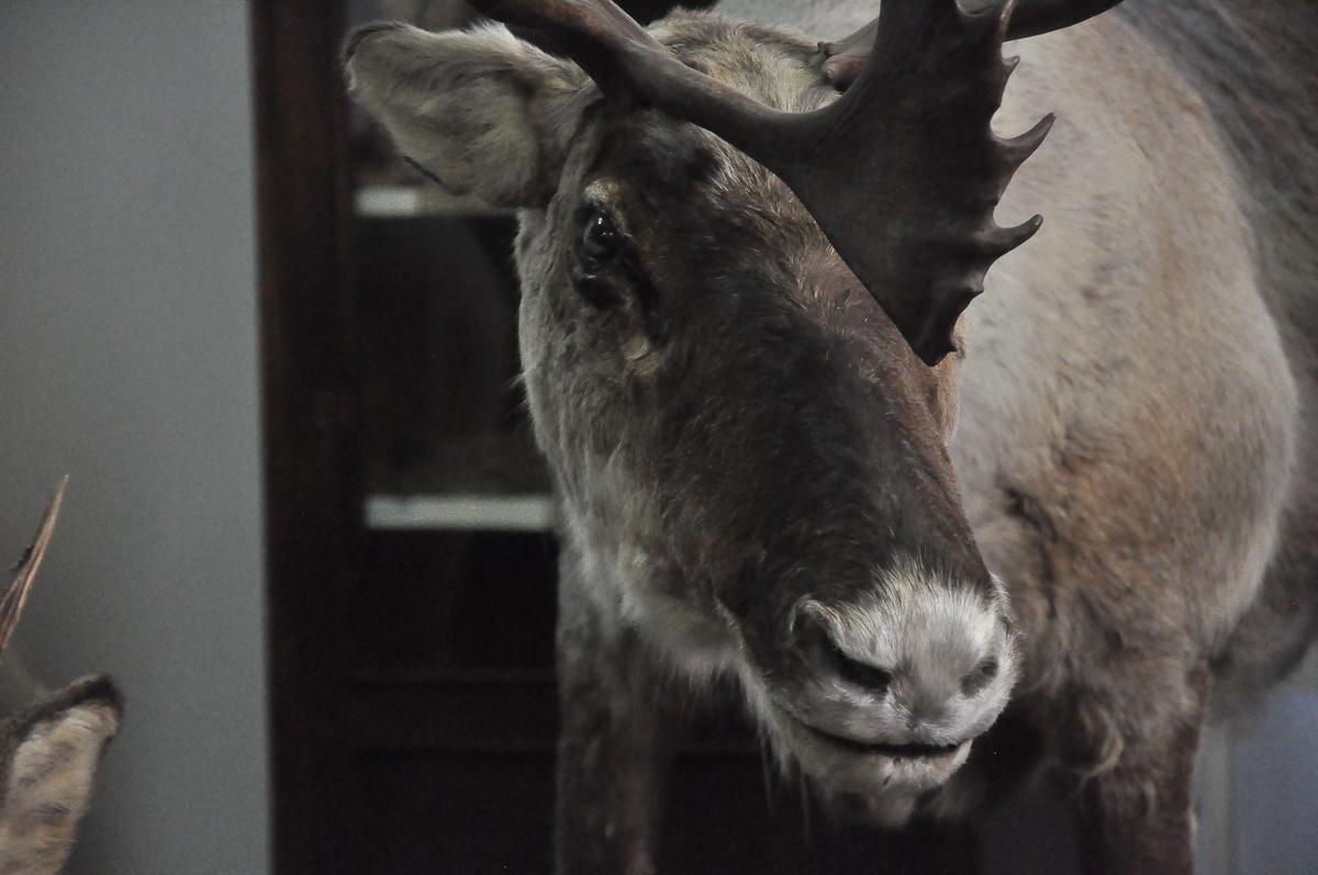 В Ярославской области хотят ввести штрафы за уничтожение редких животных и растений из региональной Красной книги
