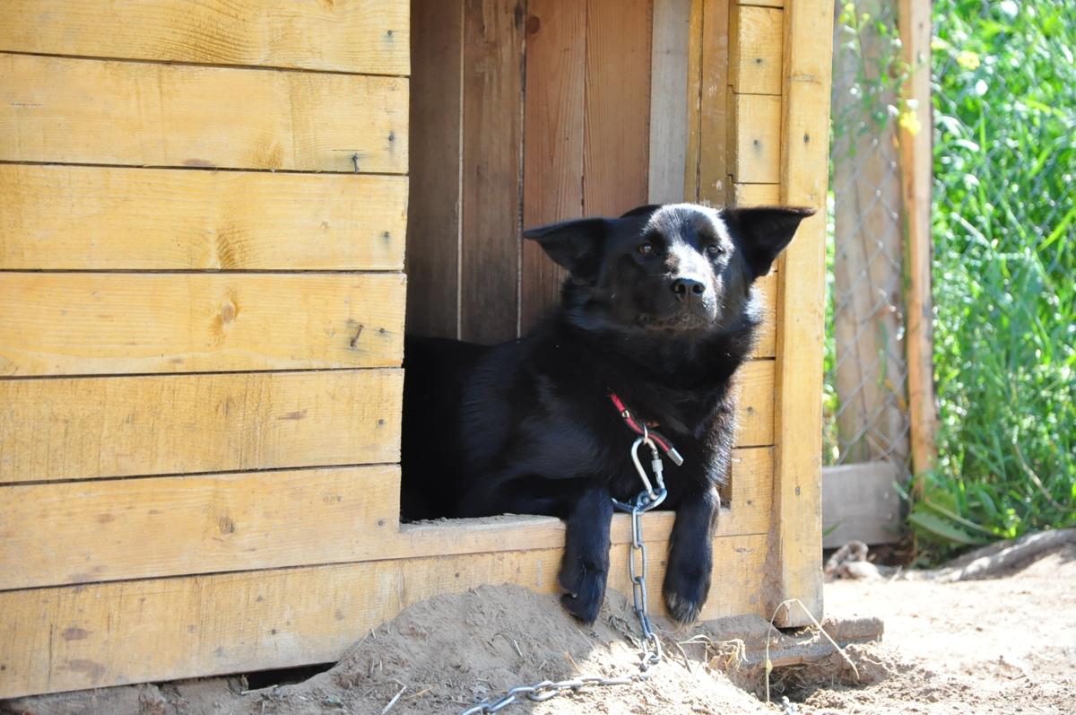 В Ярославской области двоих рецидивистов осудят за убийство собаки