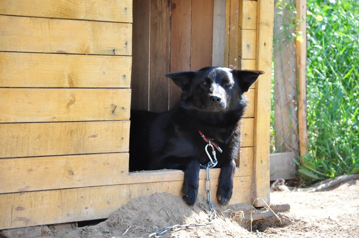 В Ярославской области полицейские застрелили бросавшуюся на людей большую собаку