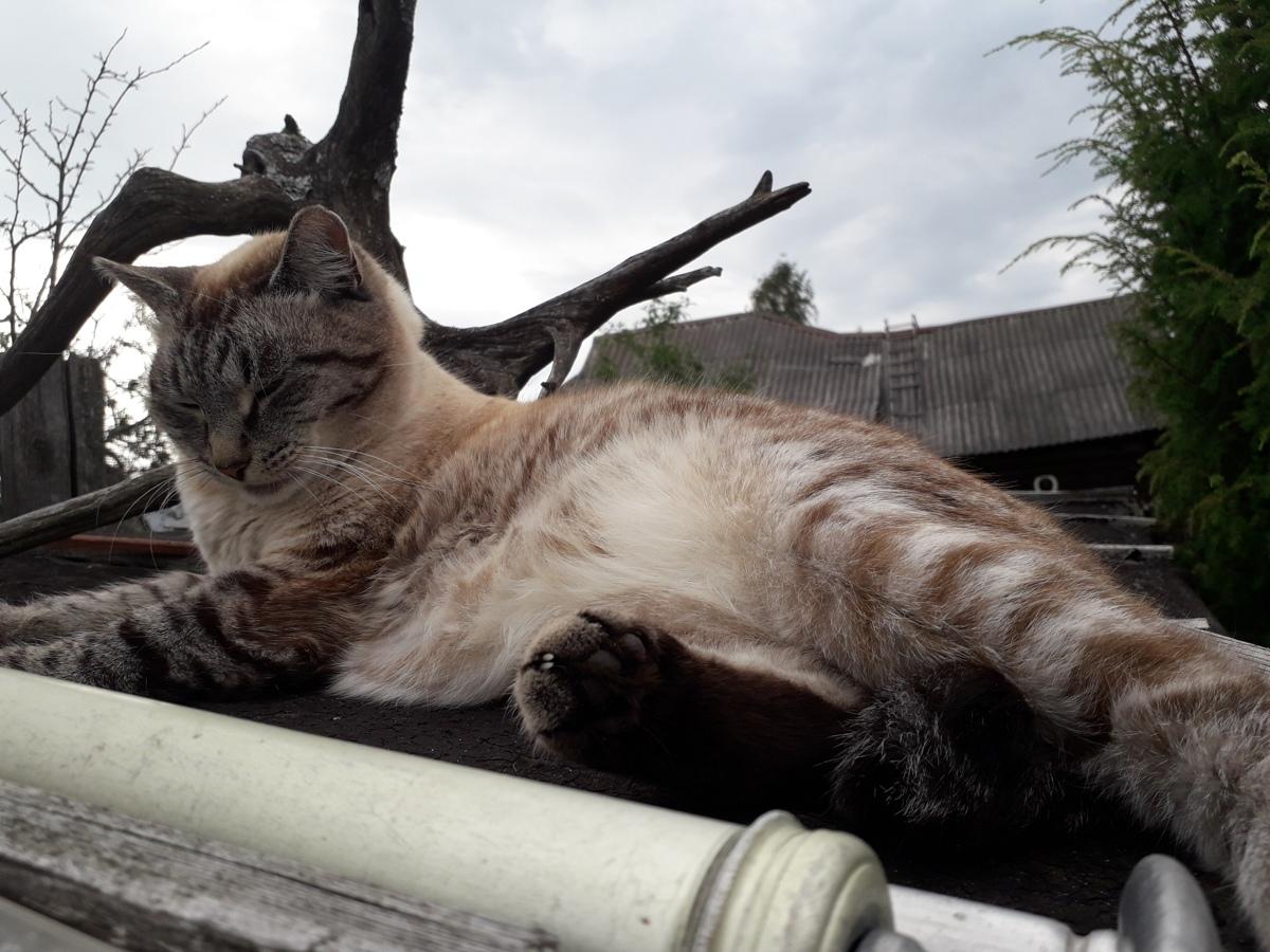 В Ярославле выявили бешеную домашнюю кошку