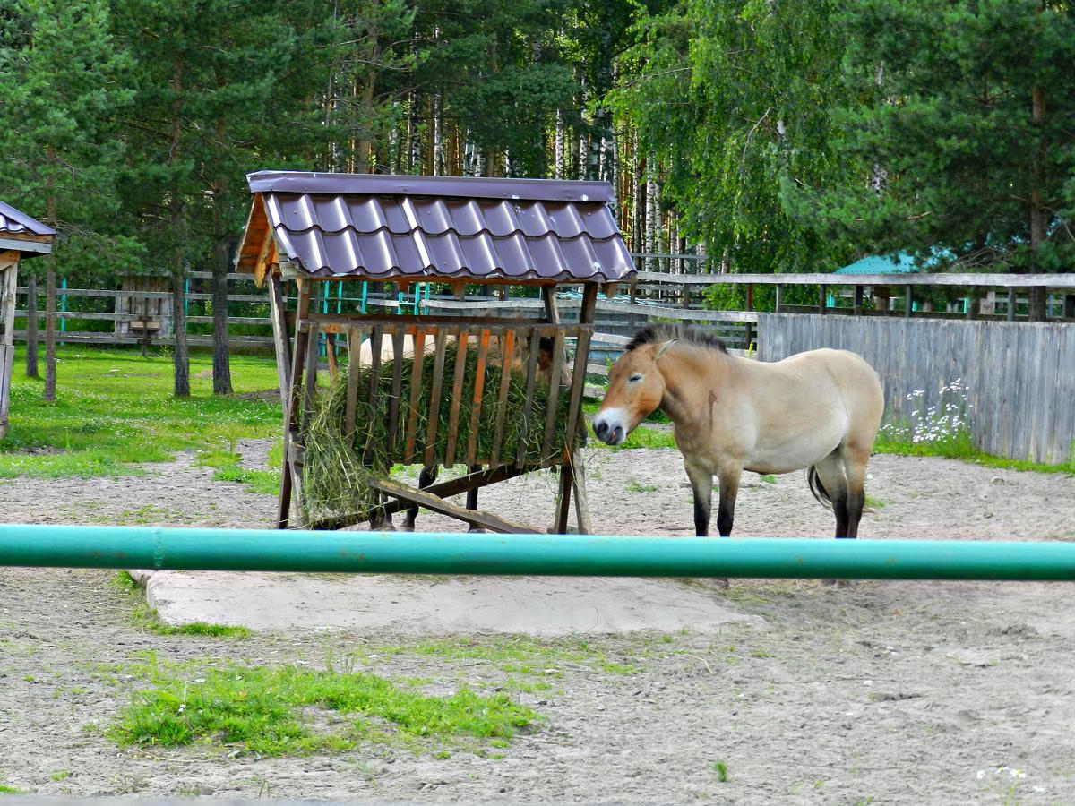 Ярославский зоопарк попал в топ-10 самых интересных для детей