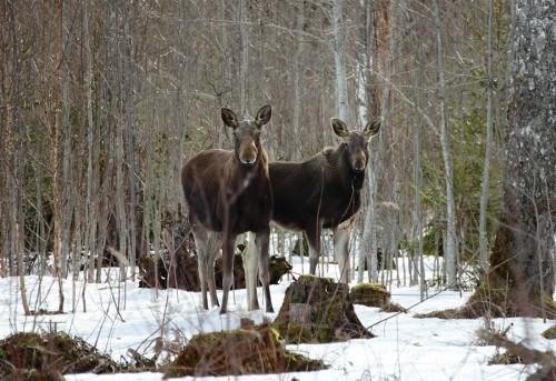 В Ярославской области браконьера вычислили по фрагменту пули