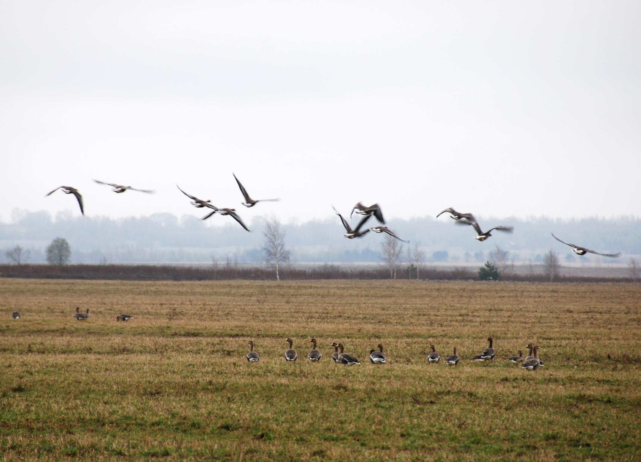 Сегодня в Ярославской области отмечают Международный день птиц