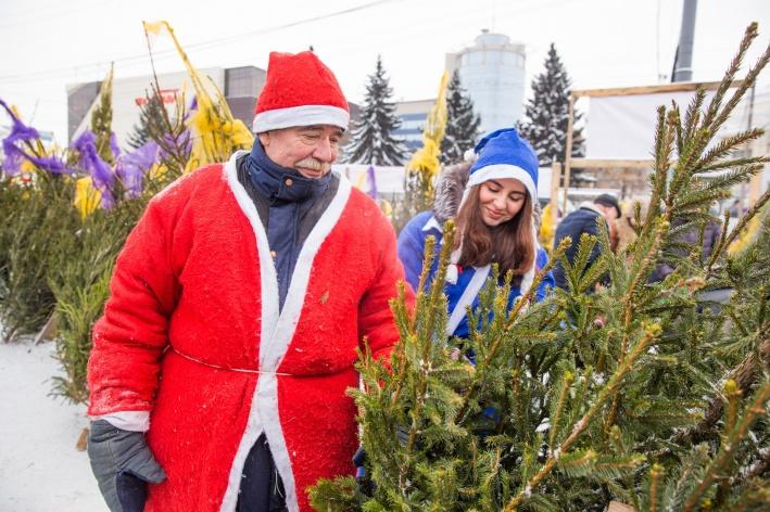 В Ярославле открылись восемь елочных базаров: адреса