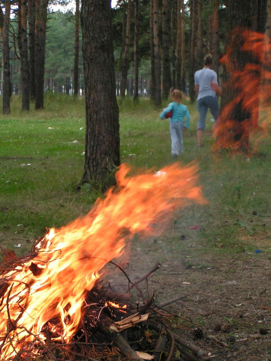 Нарушители правил пожарной безопасности в лесах должны выплатить 2,8 миллиона рублей