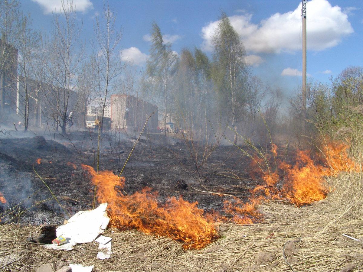В Ярославской области с начала года из-за палов травы сгорело 13 домов