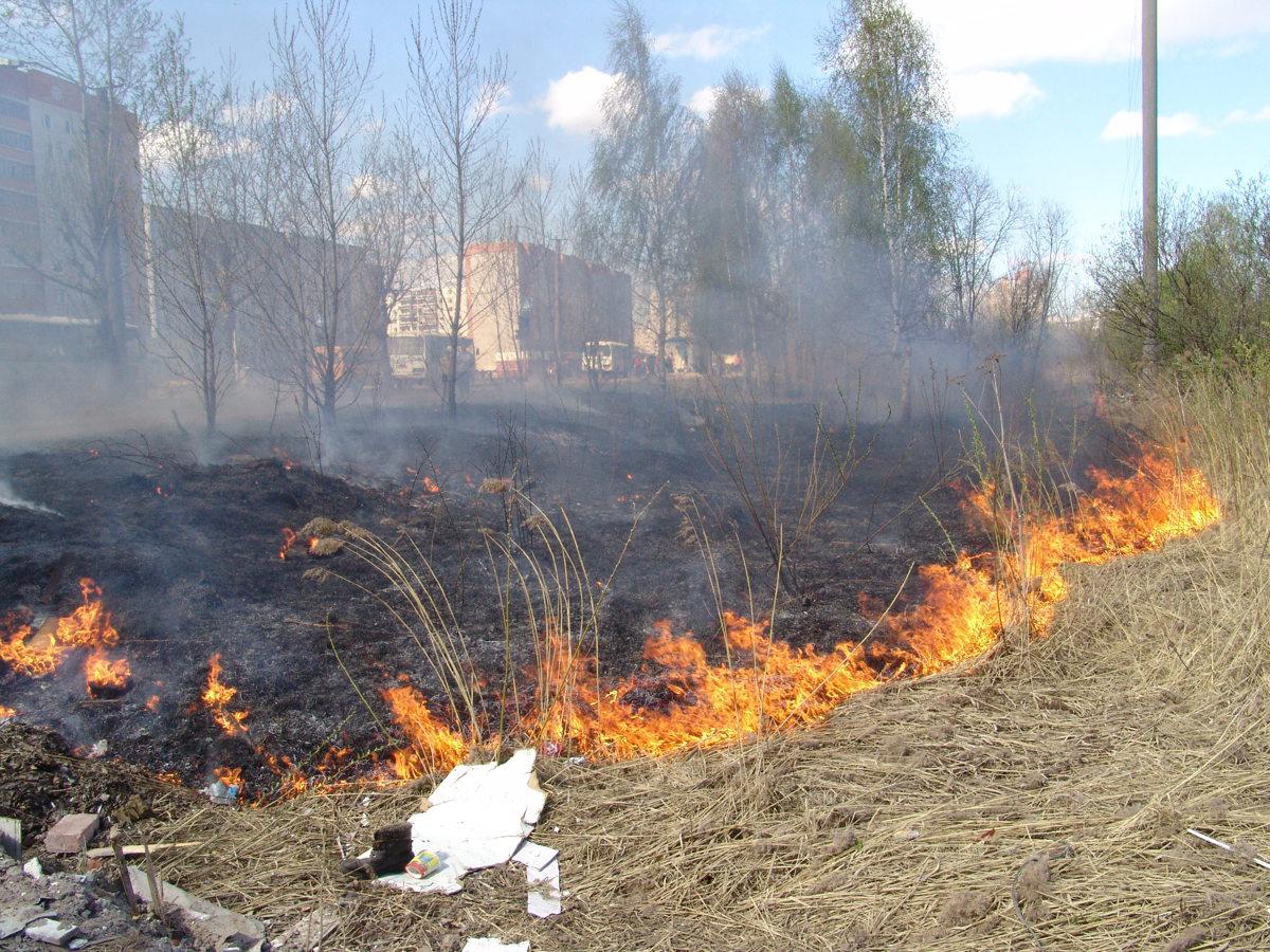 В трех районах Ярославской области введут чрезвычайный класс пожароопасности