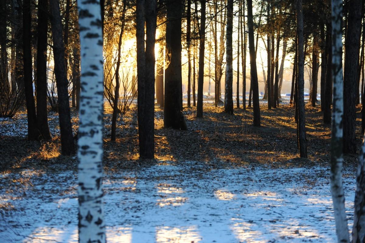 Аномально теплая погода сохранится в Ярославле в выходные