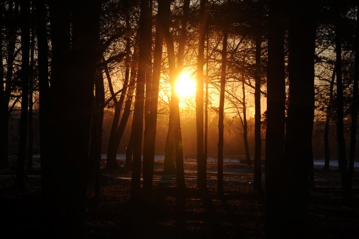В выходные в Ярославле начнется существенное потепление