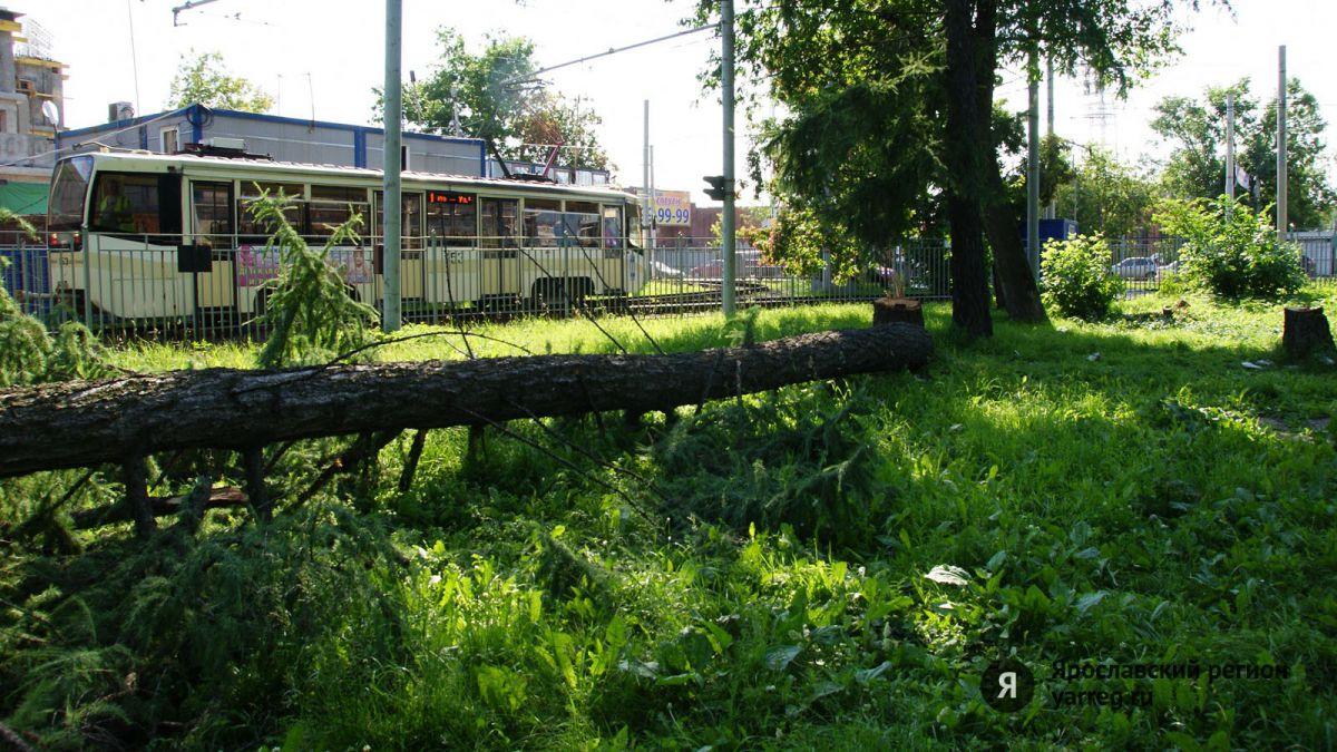 Возбуждено уголовное дело о вырубке деревьев в Бутусовском парке Ярославля
