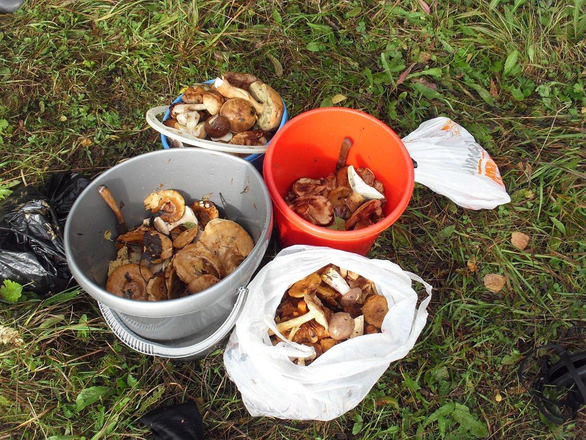 В Ярославской области полицейские на руках выносили из леса заплутавшего грибника