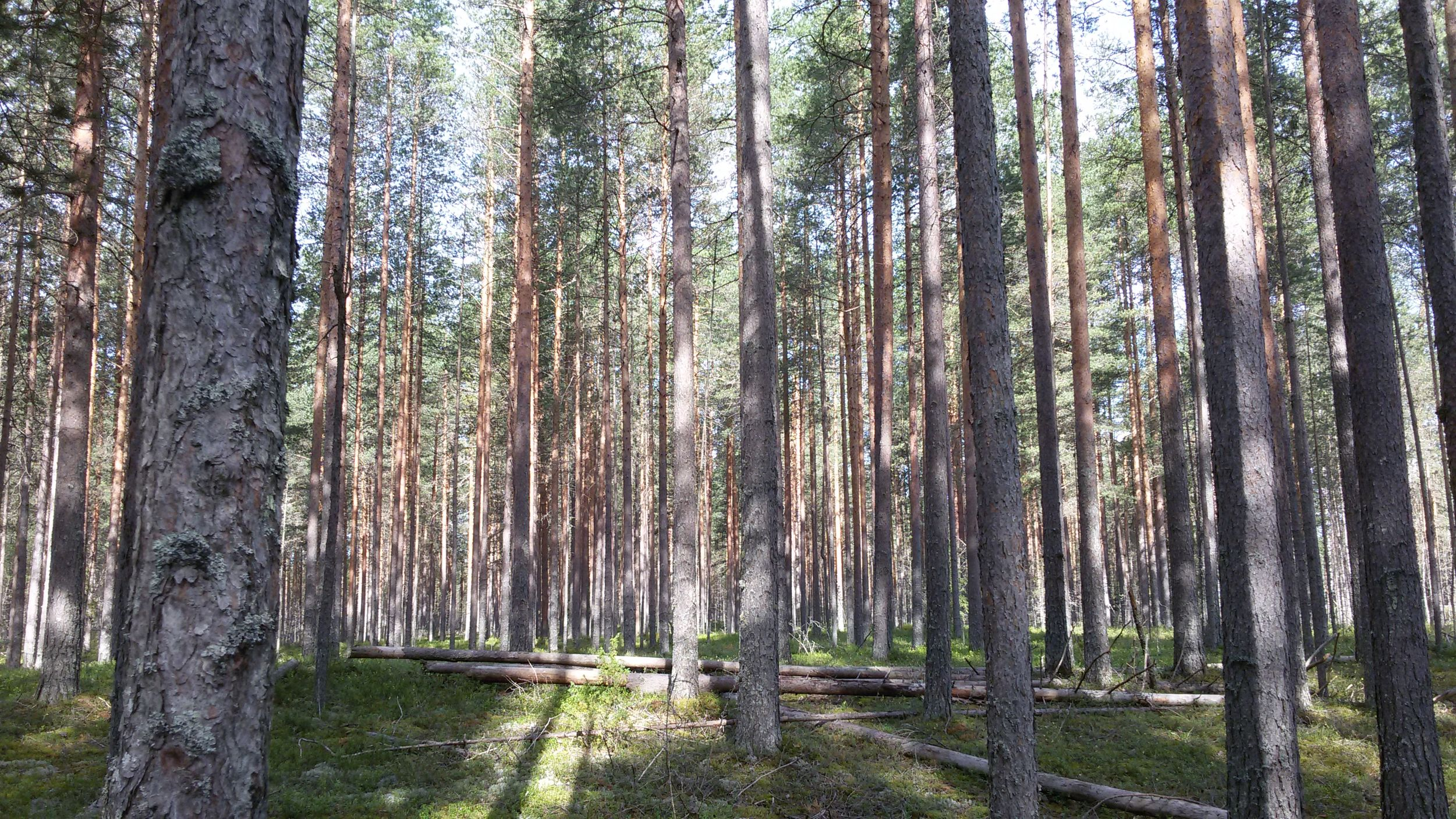 В Ярославской области с нарушителей лесного законодательства в 2021 году взыскали 11,5 миллиона рублей