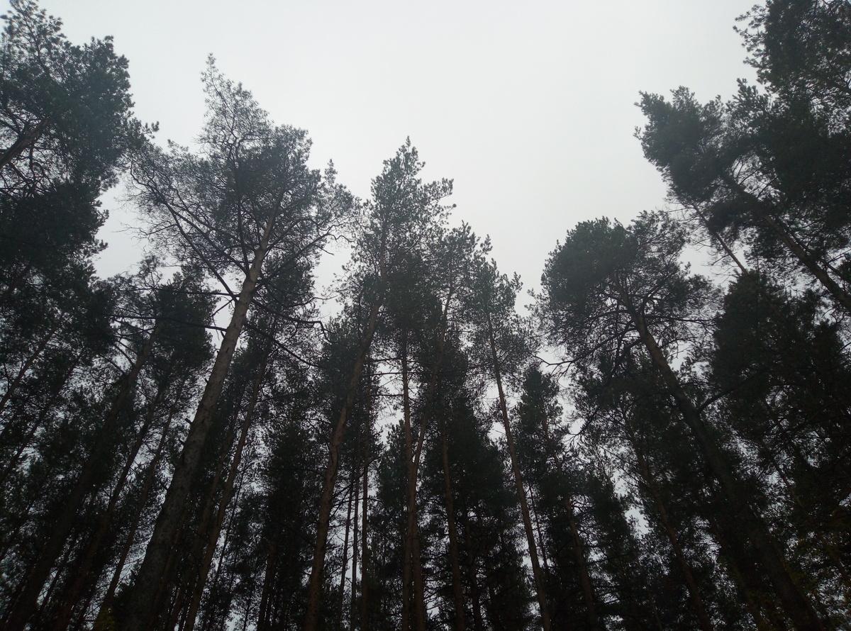 В Пошехонском районе пресекли незаконную рубку леса
