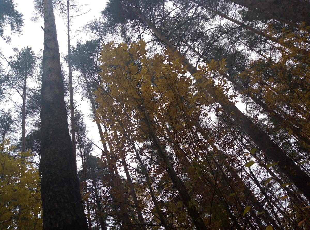 Доход за использование ярославских лесов увеличился вдвое