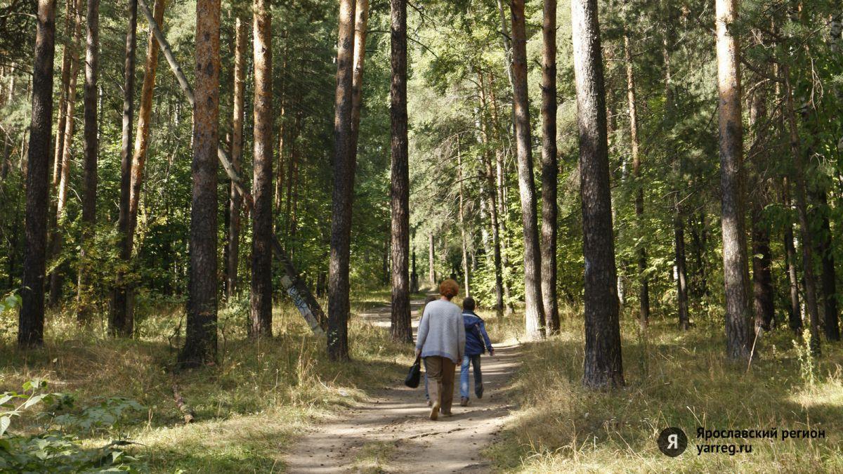 В Ярославской области в лесу заблудились дедушка и внук