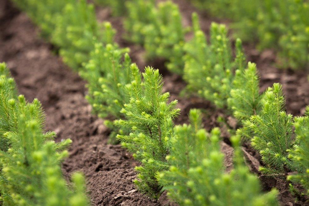 Весенние работы по искусственному лесовосстановлению проведены на площади более 2800 гектаров