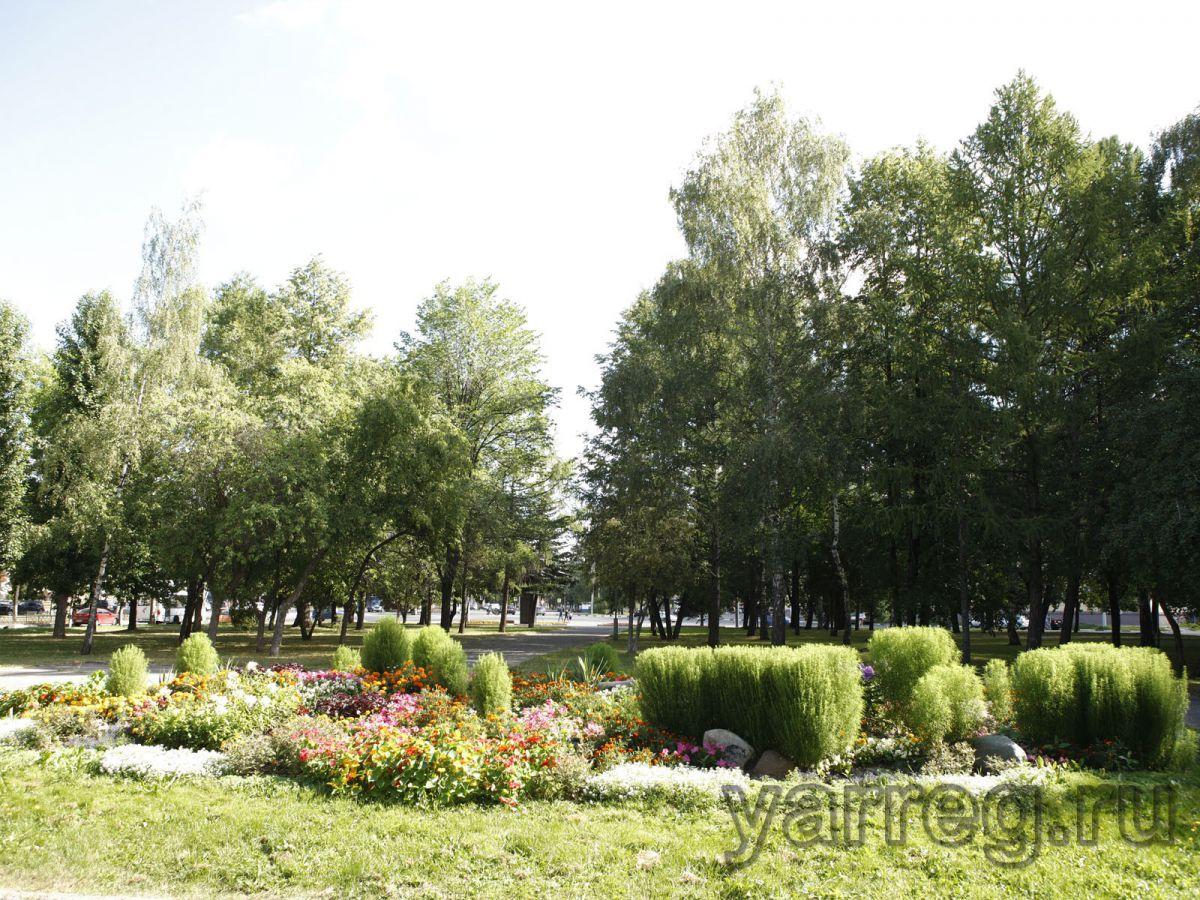 В центре Ярославля высадили 35 лип