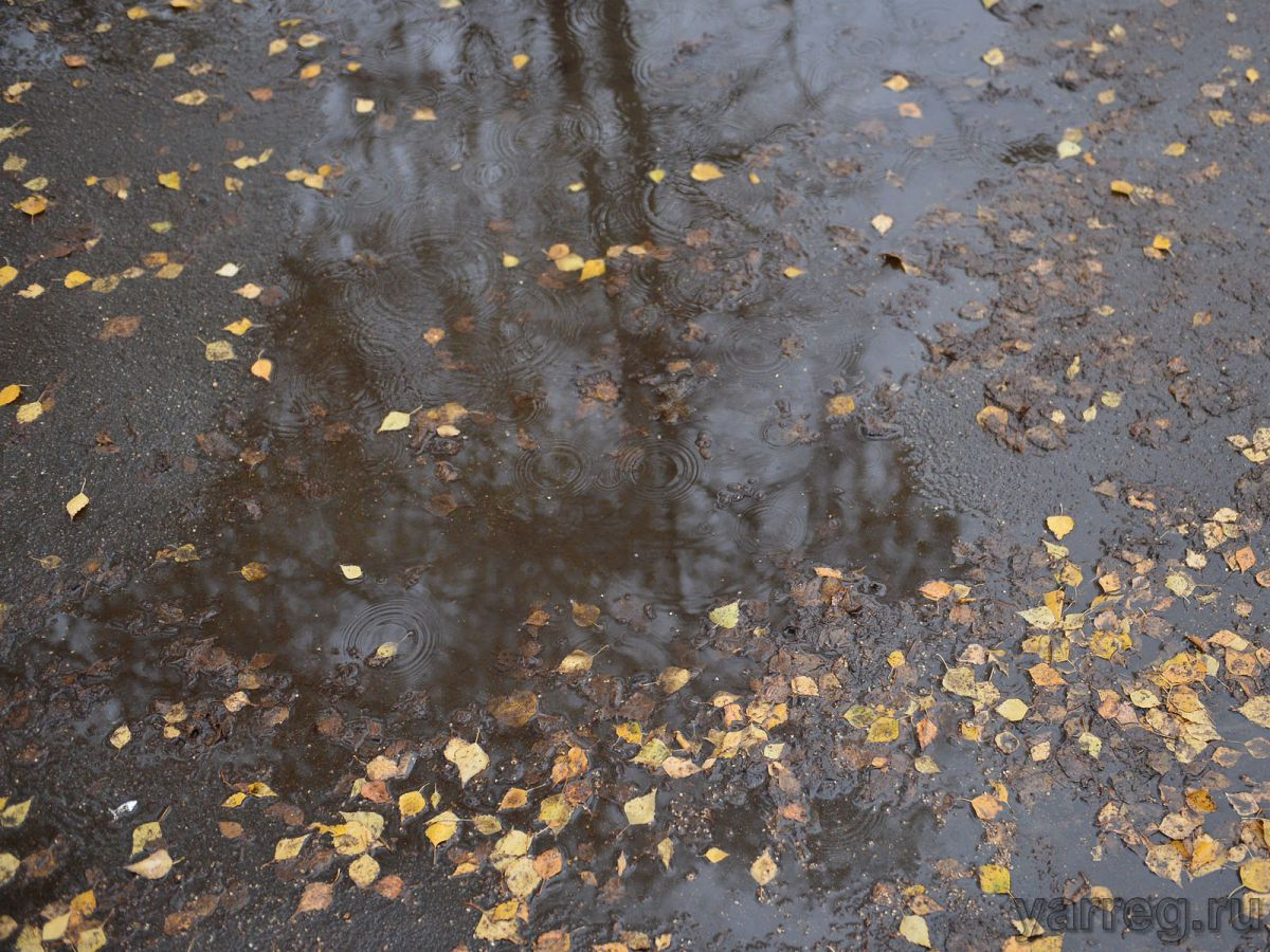 МЧС: непогода задержится в Ярославской области как минимум до выходных