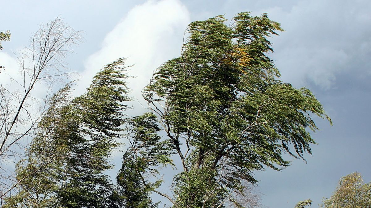 МЧС в Ярославской области опубликовало экстренное предупреждение о сильном ветре