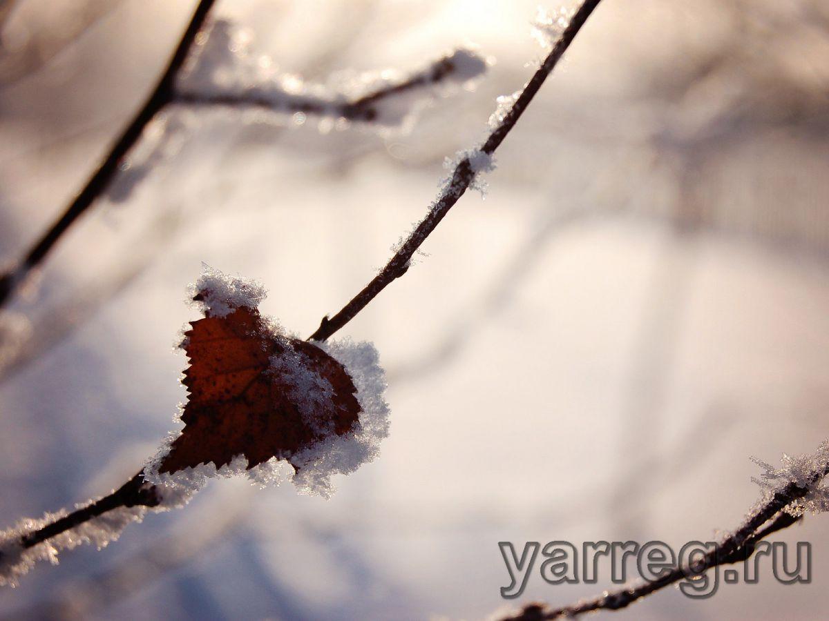 В Ярославской области резко похолодает и выпадет снег
