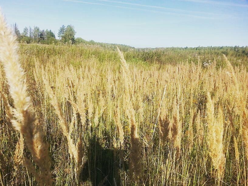 В Ярославской области на земельном участке разлили мазут