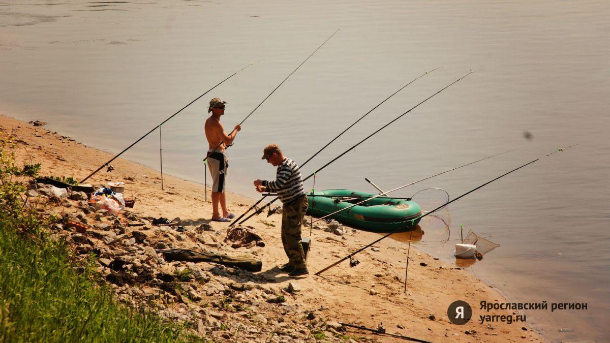 В трех реках Ярославской области зафиксирован мор рыбы