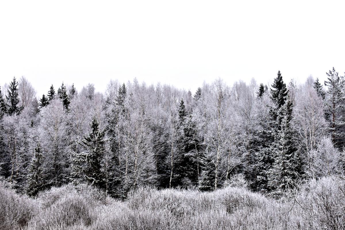 В Ярославской области задержали браконьера, убившего лося