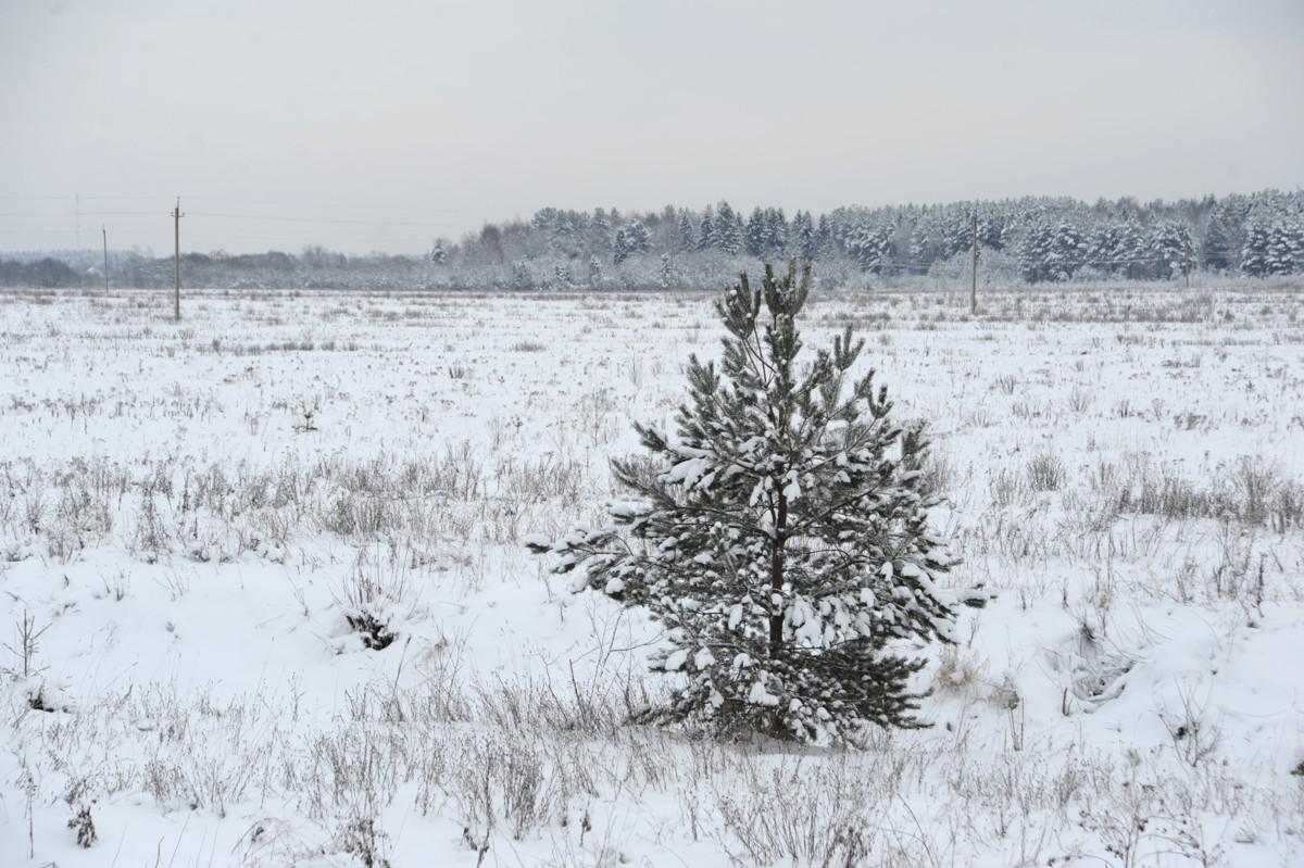 В праздники в Ярославской области ожидается существенное потепление