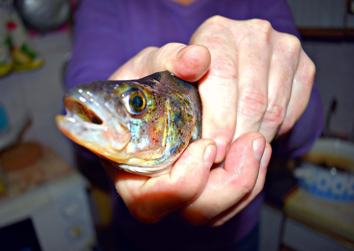 В Ярославской области браконьер за 156 выловленных рыб заплатит 78 тысяч рублей